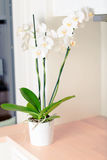 Orchid on kitchen Royalty Free Stock Images