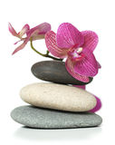 Orchid laying on stones royalty free stock photos
