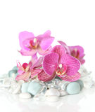 Orchid laying on stones Stock Photos
