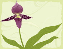 Orchid with Leaves on a Green Background Stock Images