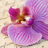 Orchid on letter Royalty Free Stock Image