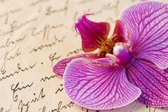 Orchid on letter Stock Images