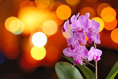 Orchid with lights Royalty Free Stock Photo