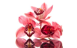 Orchid Lovers Stock Images