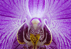 Orchid macro Stock Photography