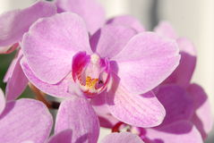 Orchid in macro Stock Photos