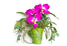 Orchid made of fabric. Stock Photos
