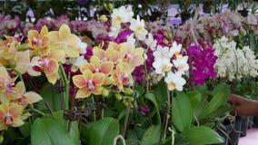 Orchid at MAHA Malaysia Royalty Free Stock Image