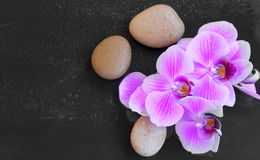Orchid with massage stones, spa setting with water drops on orchid flower and massage stones stock photography