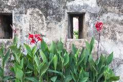 Orchid in Monte Fort in Macau Stock Photo