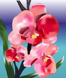 Orchid Natalie Royalty Free Stock Images