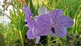 Orchid and Nature Stock Photography