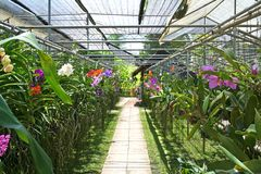 Orchid nursery. Flowers in an orchid nursery, thailand Royalty Free Stock Images