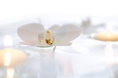 Orchid och stearinljus som svävar på bevattna Royaltyfri Fotografi