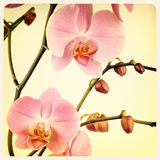 Orchid old photo Stock Photography