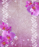 Orchid and openwork frame Stock Images