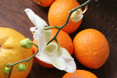 Orchid with oranges. Stock Photography