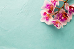 Orchid. Royalty Free Stock Photo