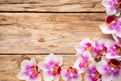 Orchid. Stock Image