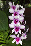 Orchid. S are blooming beautiful colors Royalty Free Stock Images