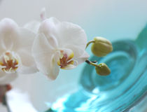 Orchid over blue water. Orchid close up over blue water in glass vase Royalty Free Stock Images