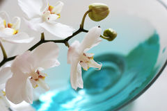 Orchid over blue water. Orchid close up over blue water in glass vase Stock Photos