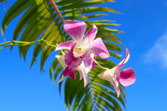 Orchid with palm leaf close-up. Gorgeous orchid with palm leaf-close up Royalty Free Stock Image