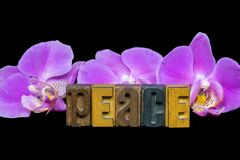 Orchid peace with wooden letterpress typeset Royalty Free Stock Images