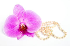 Orchid with a pearl necklace. Stock Photography