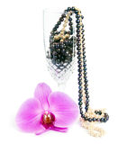 Orchid with a pearl necklace. Royalty Free Stock Image