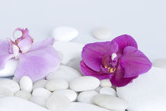 Orchid on pebble Stock Image