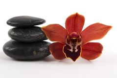Orchid and Pebbles Stock Photography