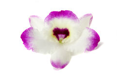 Orchid Petal Royalty Free Stock Image