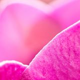 Orchid petal. Macro Royalty Free Stock Photo