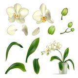 Orchid petal stalk pot realistic isolated. Flower whole and in parts, inflorescence, box, leaf. Vector illustration of individual plant components stock illustration