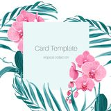 Orchid phalaenopsis flower palm tree leaves card. Card template with pink purple orchid phalaenopsis flowers and fern greenery exotic tropical jungle palm tree Royalty Free Stock Photography