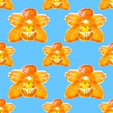 Orchid, Phalaenopsis. Seamless pattern texture of flowers. Flora Stock Photos