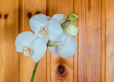 Orchid Phalaenopsis  on  wooden background Royalty Free Stock Photo