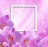 Orchid and photo frame. Pink orchid and photo frame Stock Photo