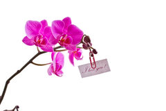 Orchid pink Stock Photo
