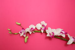 Orchid on pink. Pink Orchid on pink background Royalty Free Stock Images