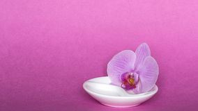 Orchid on pink background Royalty Free Stock Photography