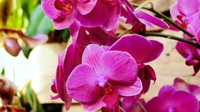 Orchid pink color stock footage