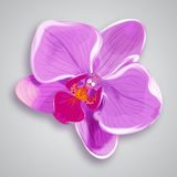 Orchid pink flower.  illustration. Orchid pink flower isolated.  illustration Royalty Free Stock Images