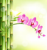 Orchid pink flowers with bamboo and sunlight on light-green Royalty Free Stock Photo