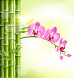 Orchid pink flowers with bamboo and sunlight on light-green Stock Photos