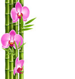 Orchid pink flowers with bamboo  on white Stock Photo