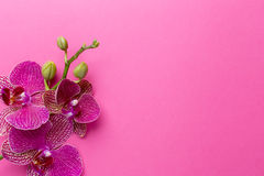 Orchid. Stock Images