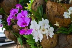 Orchid pink frower Stock Photography