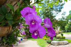 Orchid pink frower Stock Images